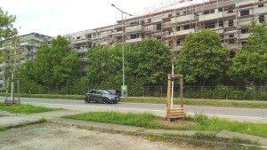 Bäume der Ringelnatzsiedlung an der Cecilienstraße